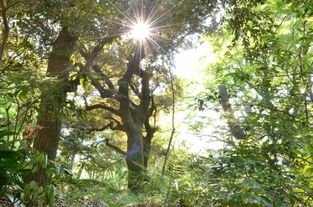 林の中+3