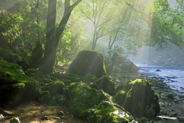 緑のダムのイメージ