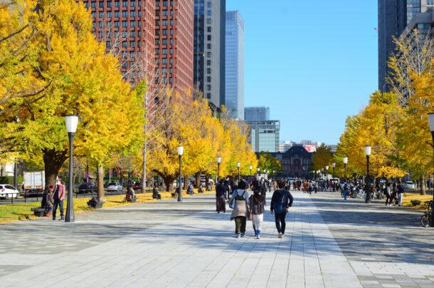東京駅のイチョウ