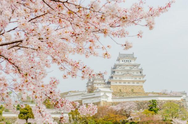 外壁が美しい姫路城