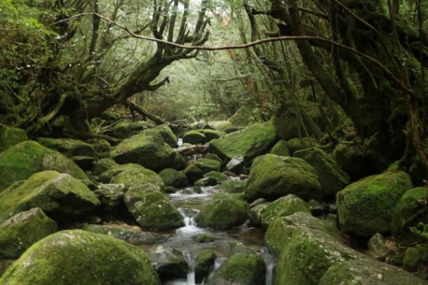 屋久島の岩石