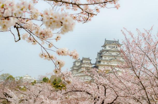 三の丸広場からの姫路城