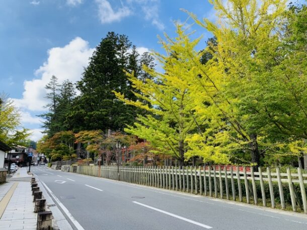 高野山の山道